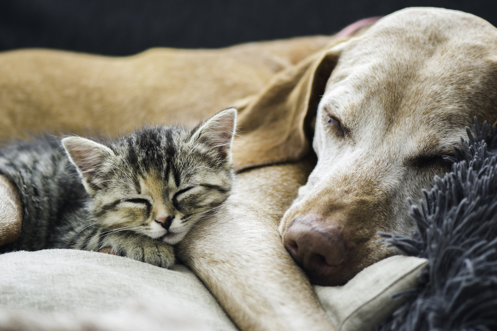 dog and cat sleeping on each other